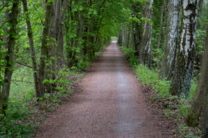 Cesta od Bohdanečského rybníku směrem na Dolany