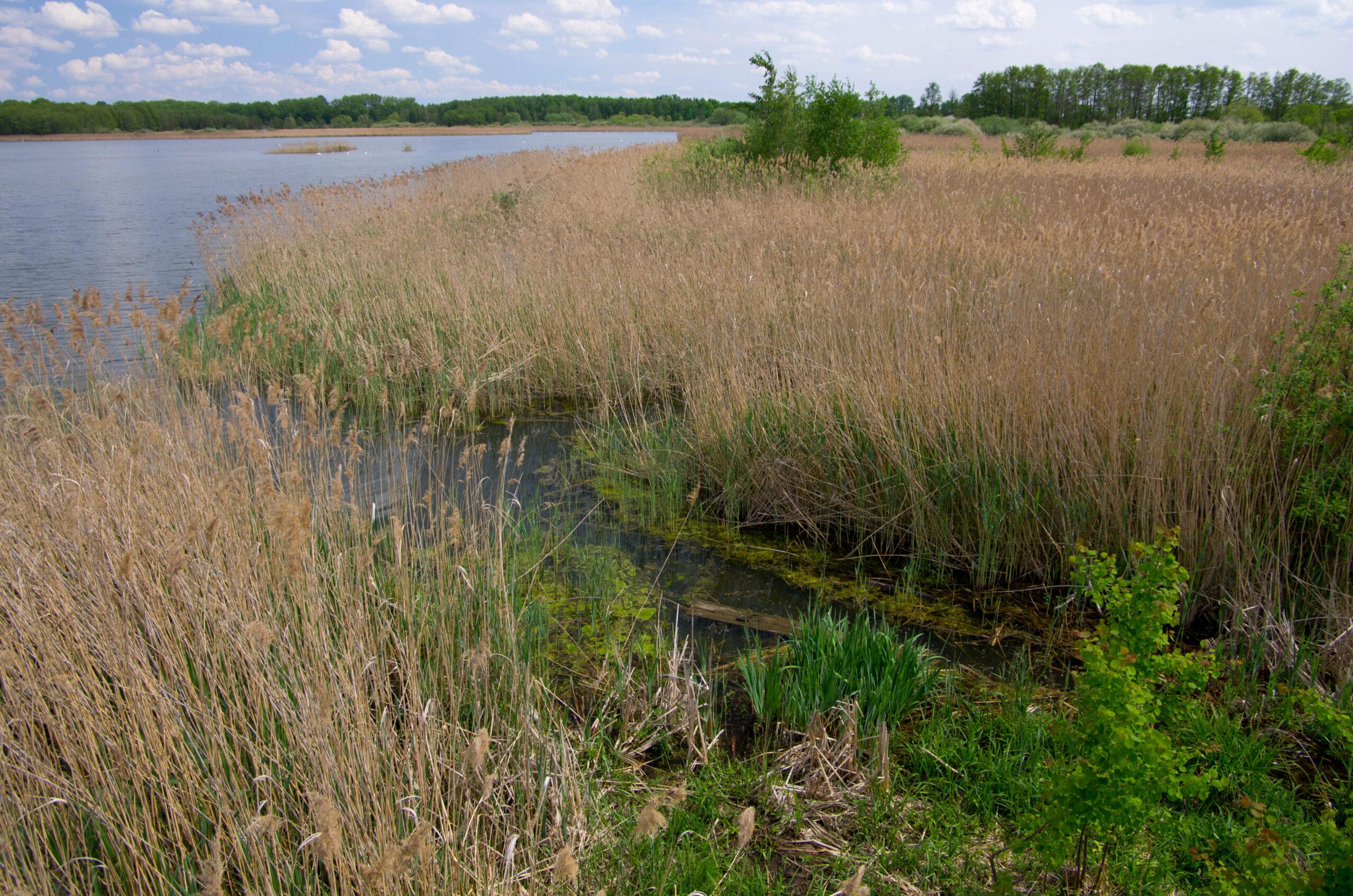 Bohdanečský rybník – ideální místo pro rodinnou dovolenou a cyklistiku