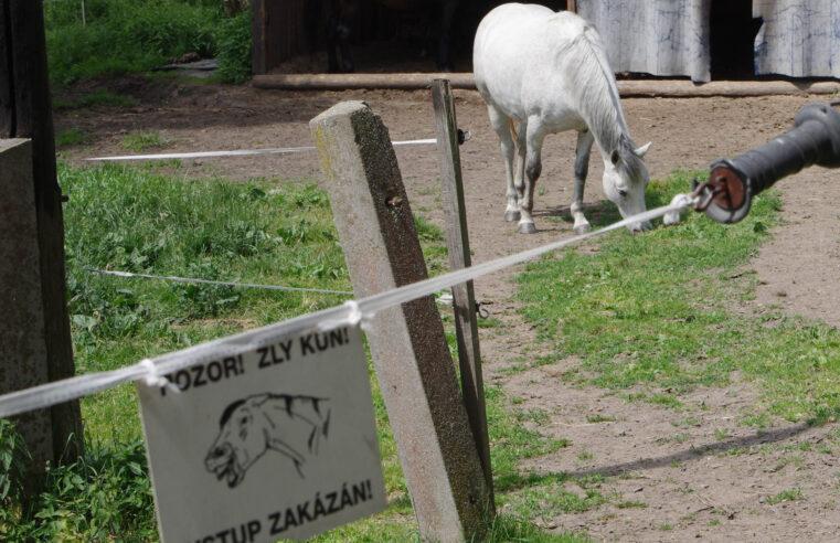 Devět z deseti koňů myslí, že za plotem je tráva zelenější
